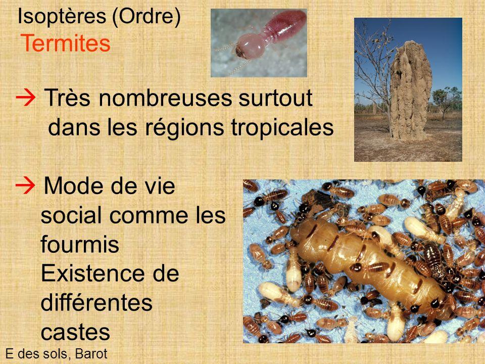 60 Isoptères (Ordre) E des sols, Barot Termites Très nombreuses surtout dans les régions tropicales Mode de vie social comme les fourmis Existence de