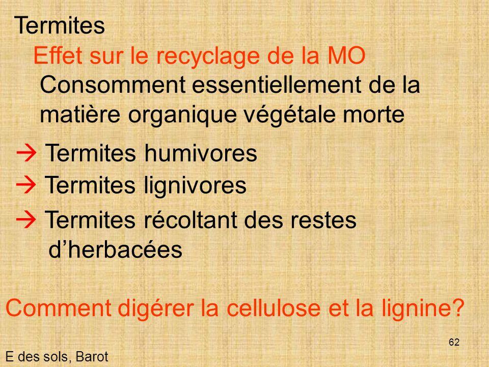 62 E des sols, Barot Termites Effet sur le recyclage de la MO Consomment essentiellement de la matière organique végétale morte Termites humivores Ter