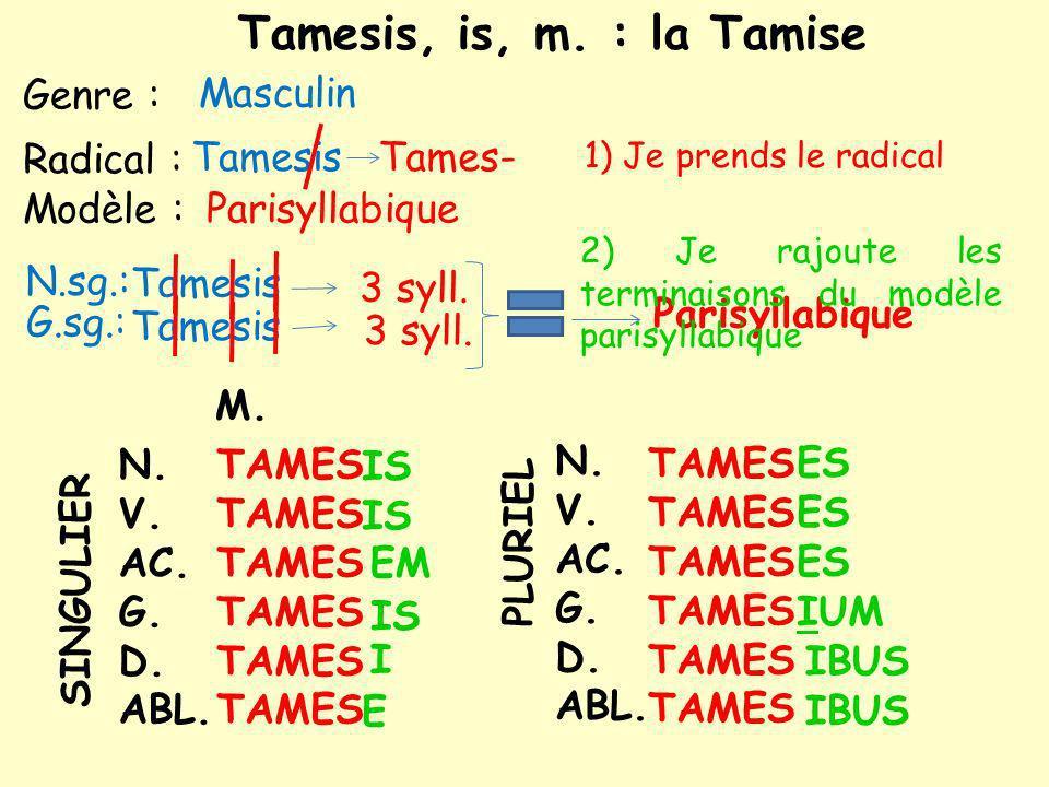 Modèle : Genre : N.sg.: Masculin Tamesis G.sg.: 3 syll.