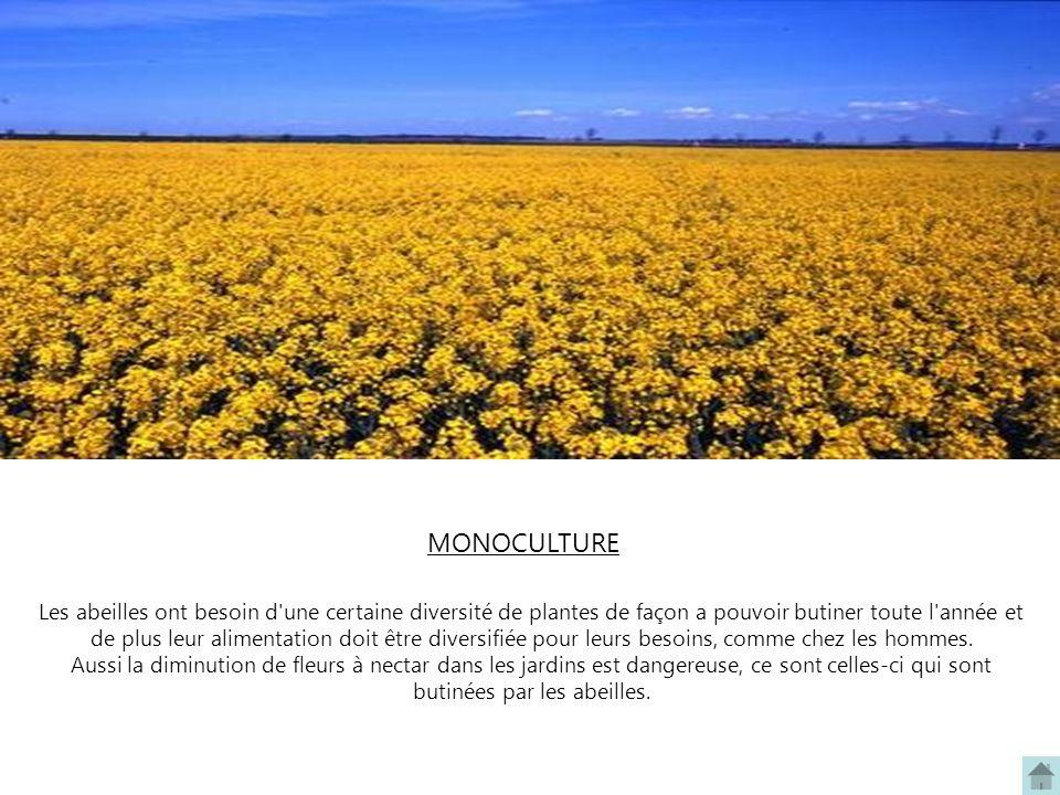 Les abeilles ont besoin d'une certaine diversité de plantes de façon a pouvoir butiner toute l'année et de plus leur alimentation doit être diversifié