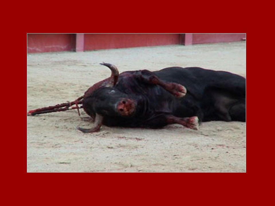 Corrida = MORTS (pour le plaisir) Vous avez peut-être entendu dire quune corrida cest un art, mais ça ne lest pas… Cest une TORTURE. Il ny a rien de b
