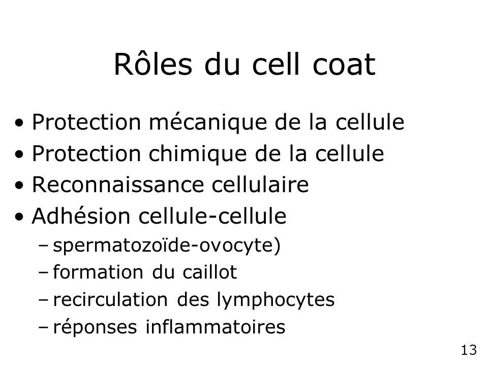 12 Schéma du cell coat