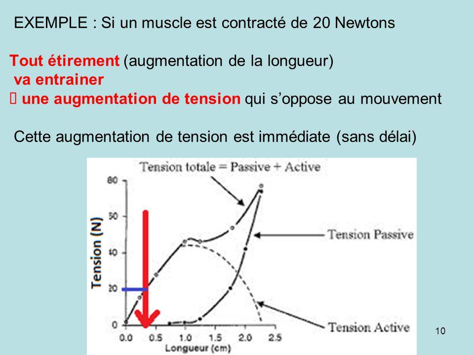 EXEMPLE : Si un muscle est contracté de 20 Newtons Tout étirement (augmentation de la longueur) va entrainer une augmentation de tension qui soppose a