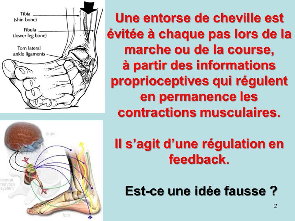 Une entorse de cheville est évitée à chaque pas lors de la marche ou de la course, à partir des informations proprioceptives qui régulent en permanenc