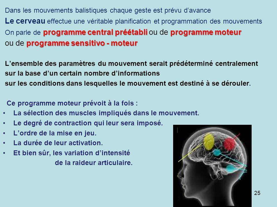 Dans les mouvements balistiques chaque geste est prévu davance Le cerveau effectue une véritable planification et programmation des mouvements program