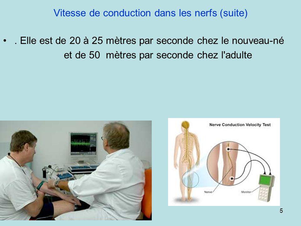 Vitesse de conduction dans les nerfs (suite). Elle est de 20 à 25 mètres par seconde chez le nouveau-né et de 50 mètres par seconde chez l'adulte 5