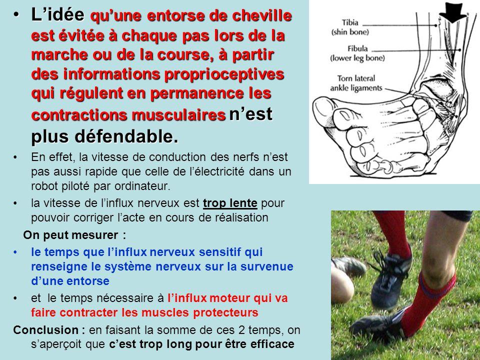 Lidée quune entorse de cheville est évitée à chaque pas lors de la marche ou de la course, à partir des informations proprioceptives qui régulent en p