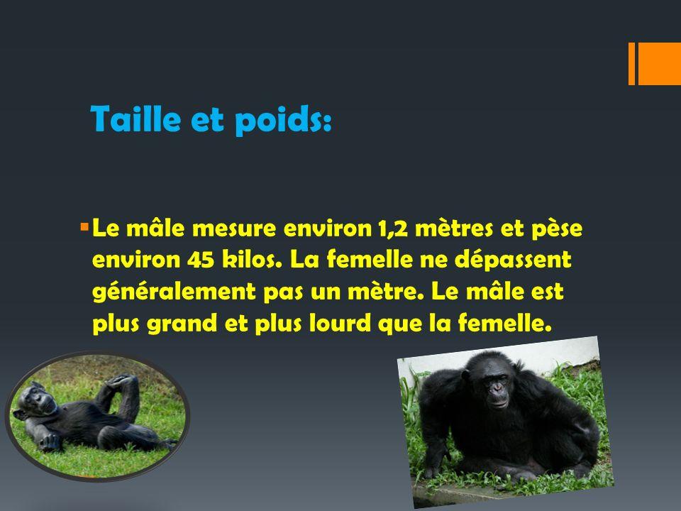 Taille et poids: Le mâle mesure environ 1,2 mètres et pèse environ 45 kilos. La femelle ne dépassent généralement pas un mètre. Le mâle est plus grand