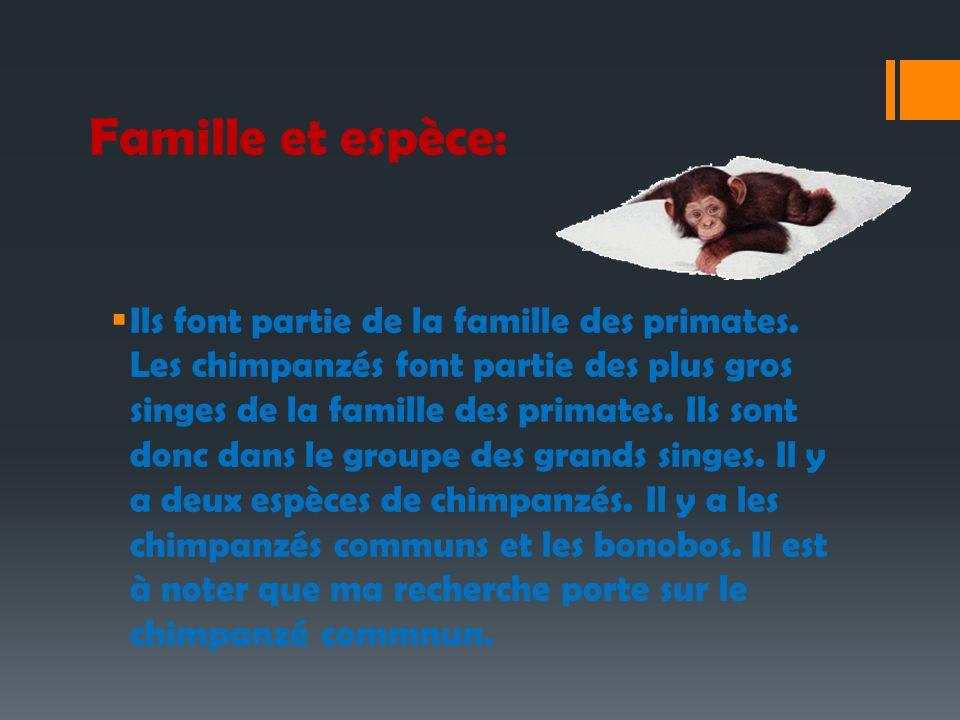 Famille et espèce: Ils font partie de la famille des primates. Les chimpanzés font partie des plus gros singes de la famille des primates. Ils sont do
