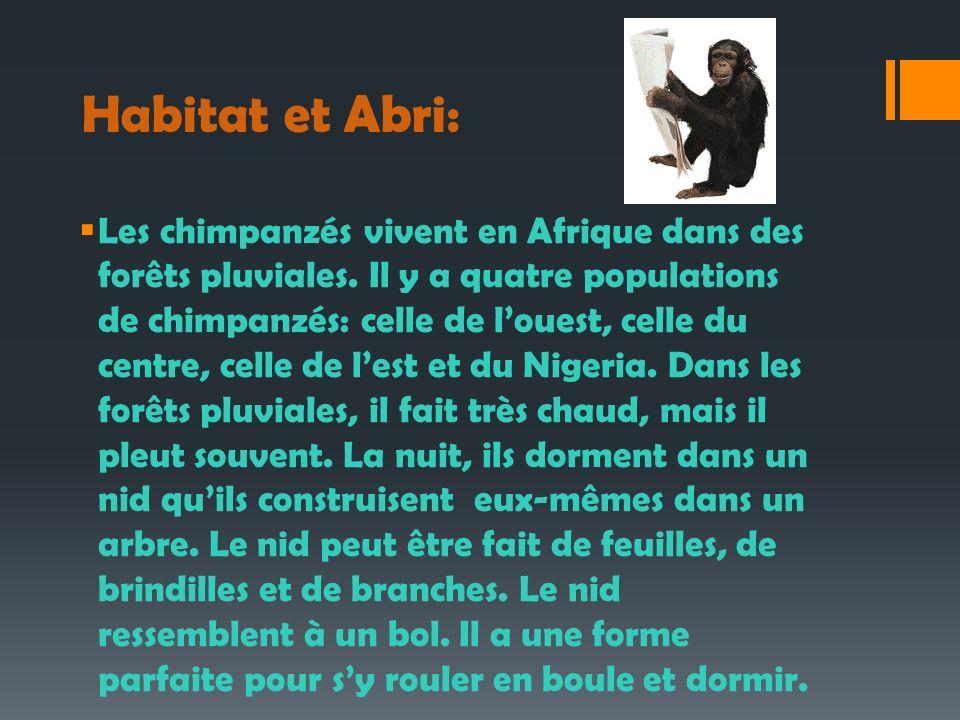 Habitat et Abri: Les chimpanzés vivent en Afrique dans des forêts pluviales. Il y a quatre populations de chimpanzés: celle de louest, celle du centre