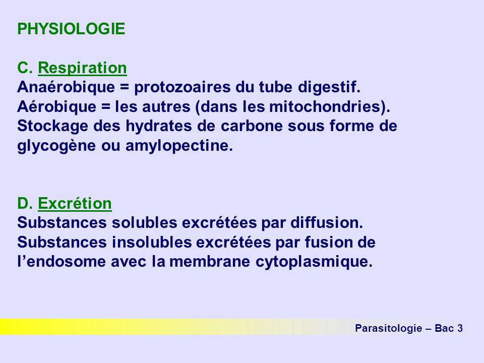 PHYSIOLOGIE C.Respiration Anaérobique = protozoaires du tube digestif.