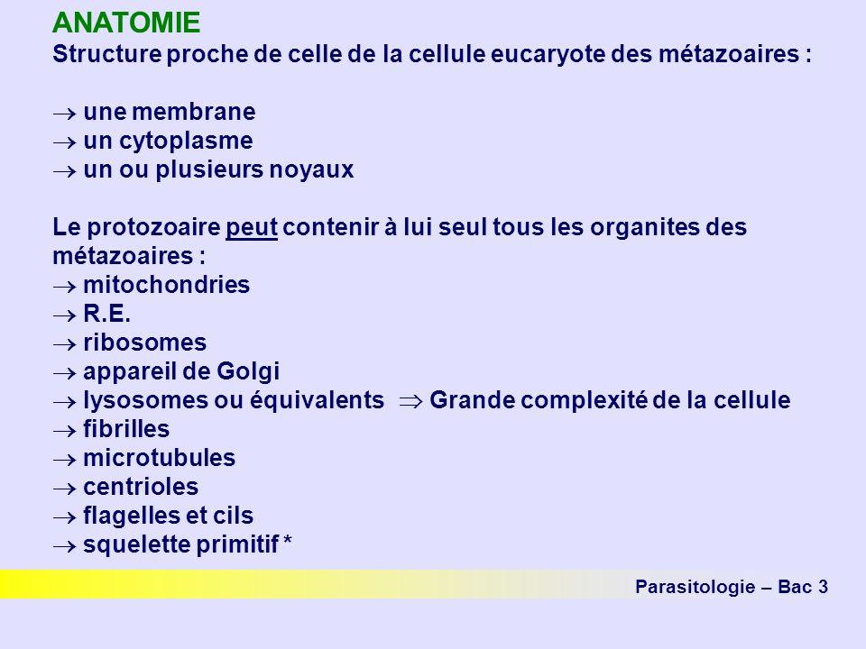 ANATOMIE Structure proche de celle de la cellule eucaryote des métazoaires : une membrane un cytoplasme un ou plusieurs noyaux Le protozoaire peut contenir à lui seul tous les organites des métazoaires : mitochondries R.E.