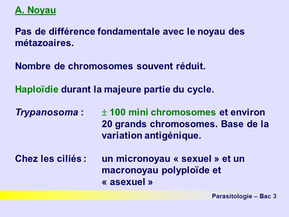 A.Noyau Pas de différence fondamentale avec le noyau des métazoaires.