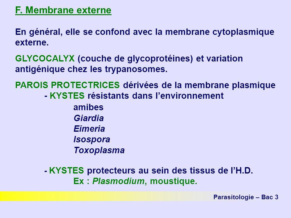 F.Membrane externe En général, elle se confond avec la membrane cytoplasmique externe.