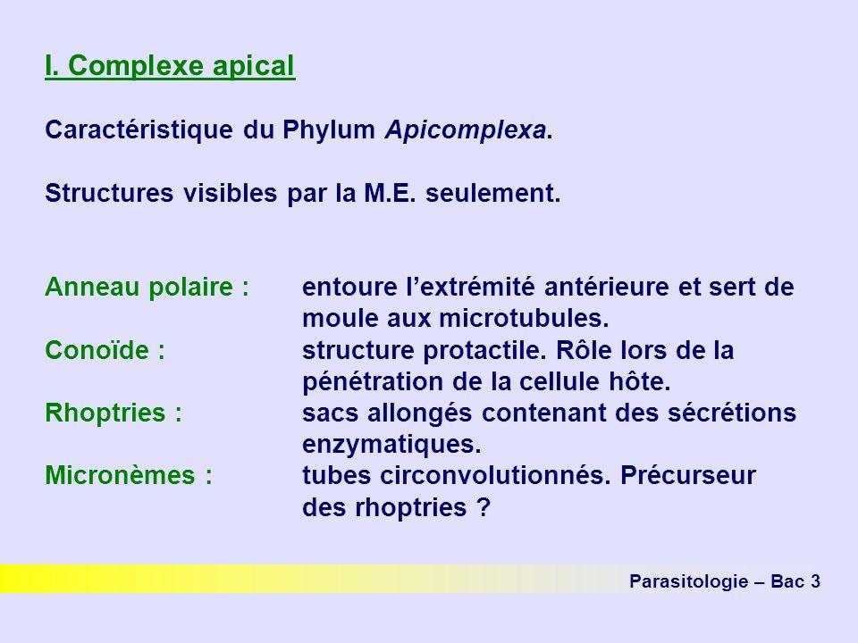 I.Complexe apical Caractéristique du Phylum Apicomplexa.