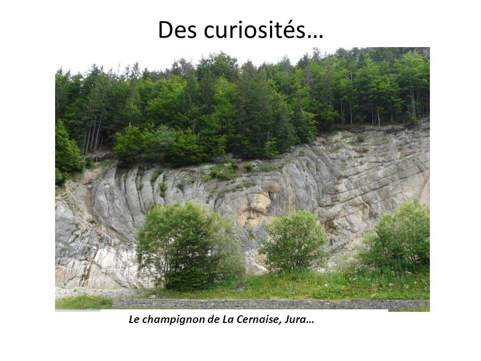 Des curiosités… Le champignon de La Cernaise, Jura…