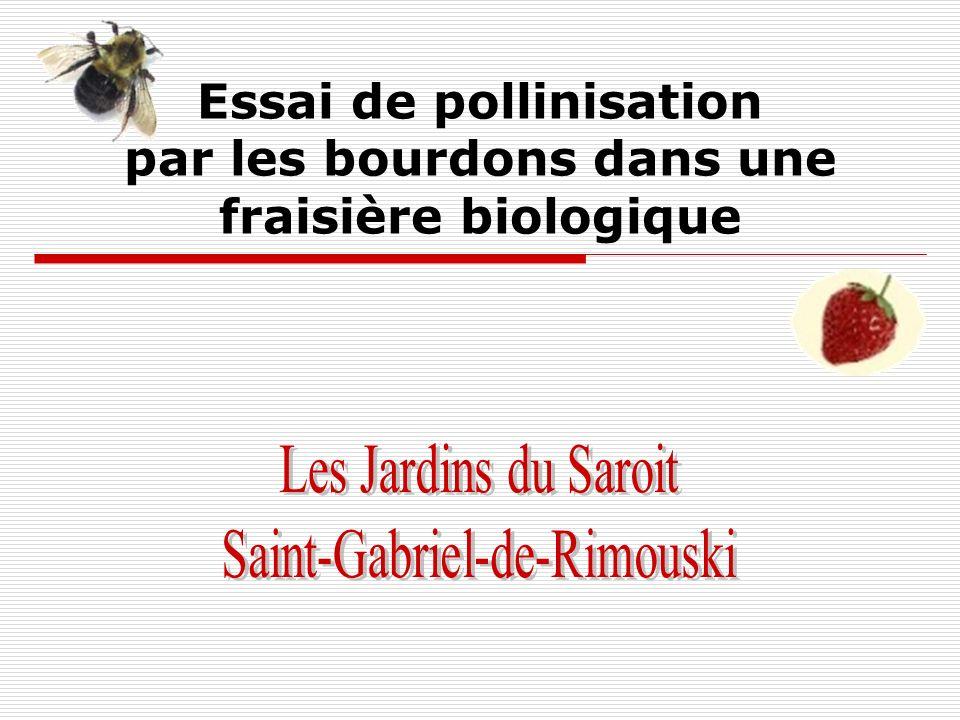 Les Jardins du Saroit, Saint-Gabriel-de-Rimouski Deux quads (ensemble de 4 ruches) de bourdons ont été disposés en alternance selon la période de floraison à lintérieur de 3 champs, soit les champs 14 (fraises 2 ans), 8 (1 an) et 1B (1 an).