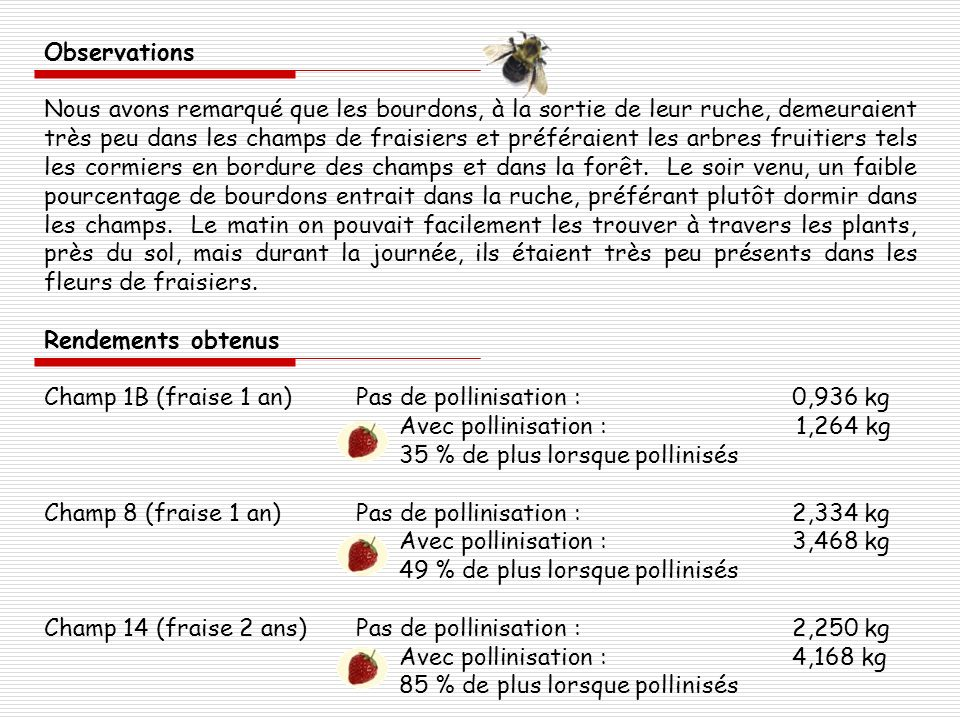 Conclusion Malgré laugmentation significative de fruits lorsque les fleurs sont pollinisées, nous constatons que celle-ci est très peu due à la présence des bourdons vu leur absence quasi constante durant le jour, mais plutôt à la présence dinsectes pollinisateurs indigènes comme les abeilles, les syrphes et les bourdons sauvages Lan dernier, avec la pollinisation par les abeilles, le rendement obtenu dans la fraisière était le double.