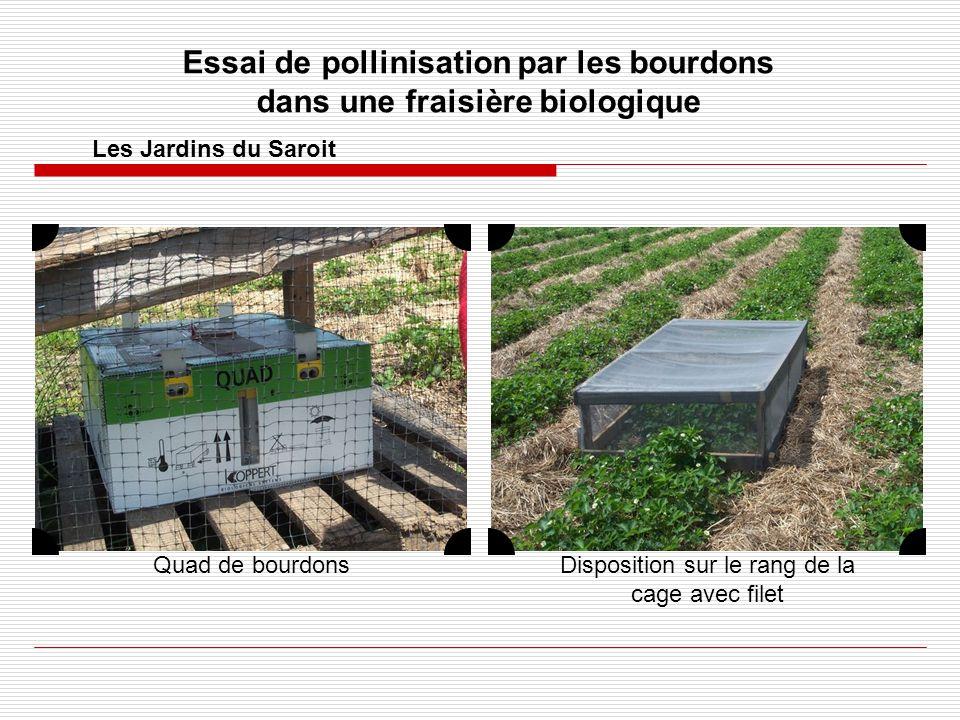 Essai de pollinisation par les bourdons dans une fraisière biologique Les Jardins du Saroit