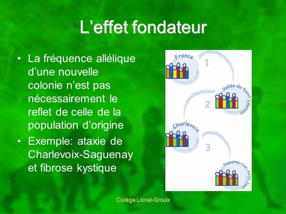 Leffet fondateur La fréquence allélique dune nouvelle colonie nest pas nécessairement le reflet de celle de la population dorigine Exemple: ataxie de
