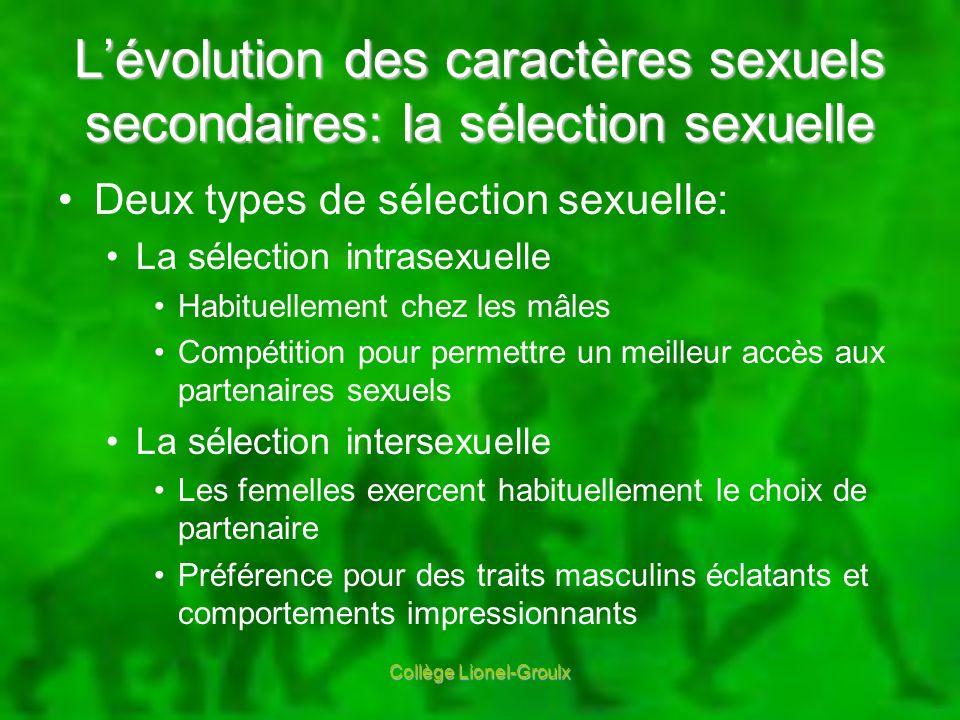 Lévolution des caractères sexuels secondaires: la sélection sexuelle Deux types de sélection sexuelle: La sélection intrasexuelle Habituellement chez
