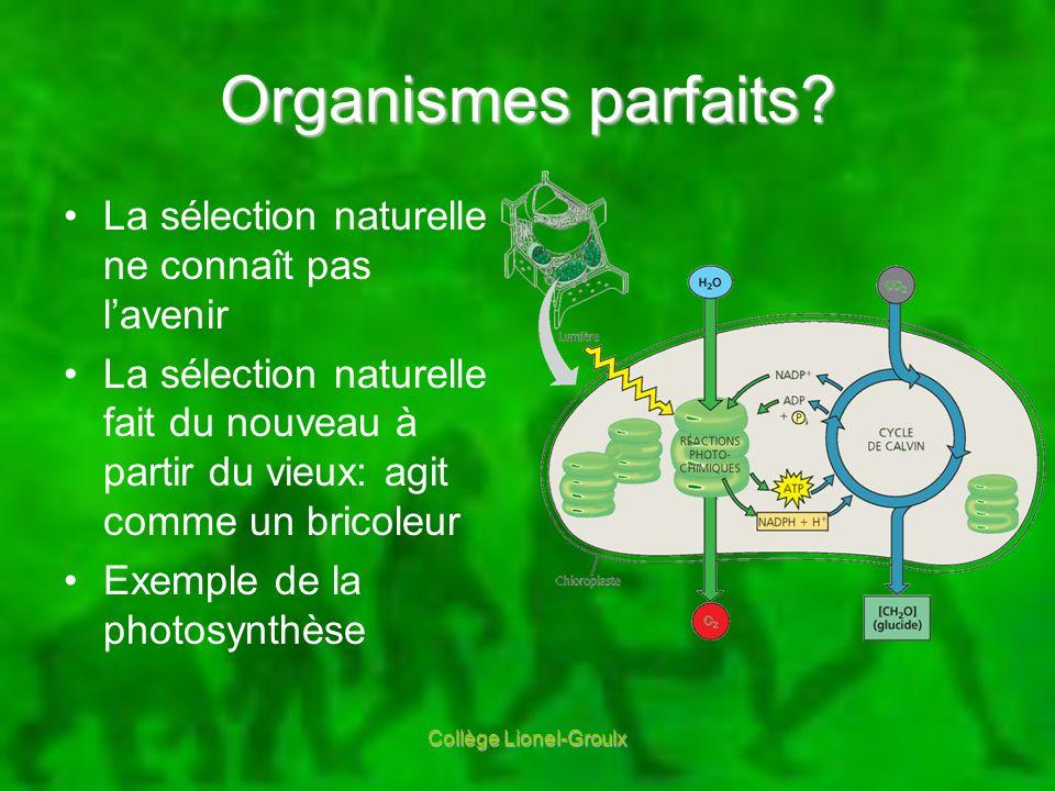 Organismes parfaits? La sélection naturelle ne connaît pas lavenir La sélection naturelle fait du nouveau à partir du vieux: agit comme un bricoleur E