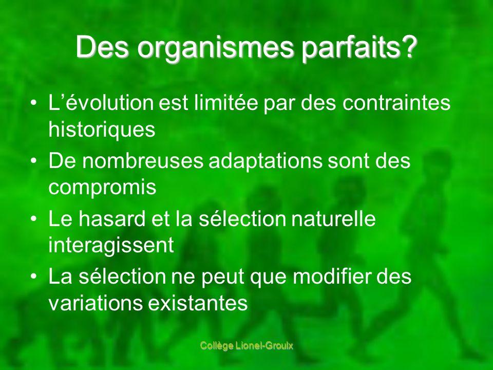Des organismes parfaits? Lévolution est limitée par des contraintes historiques De nombreuses adaptations sont des compromis Le hasard et la sélection