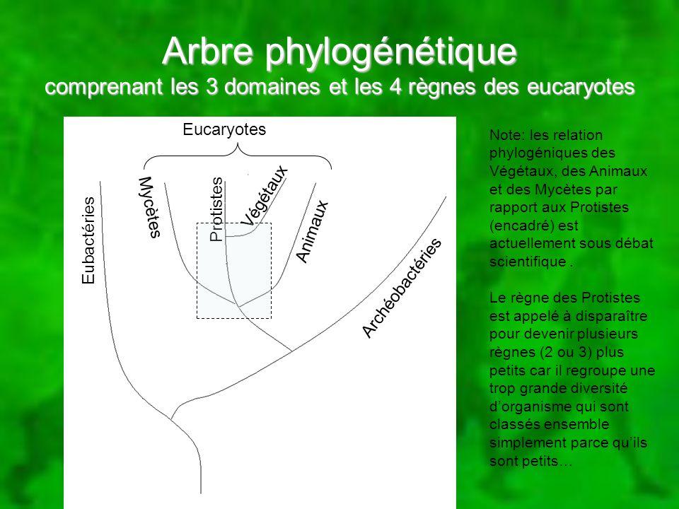 Arbre phylogénétique comprenant les 3 domaines et les 4 règnes des eucaryotes Eubactéries Archéobactéries Eucaryotes Animaux Protistes Mycètes Végétau