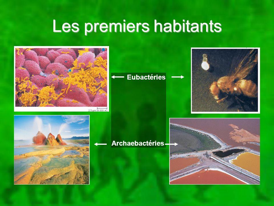 Les premiers habitants Eubactéries Archaebactéries