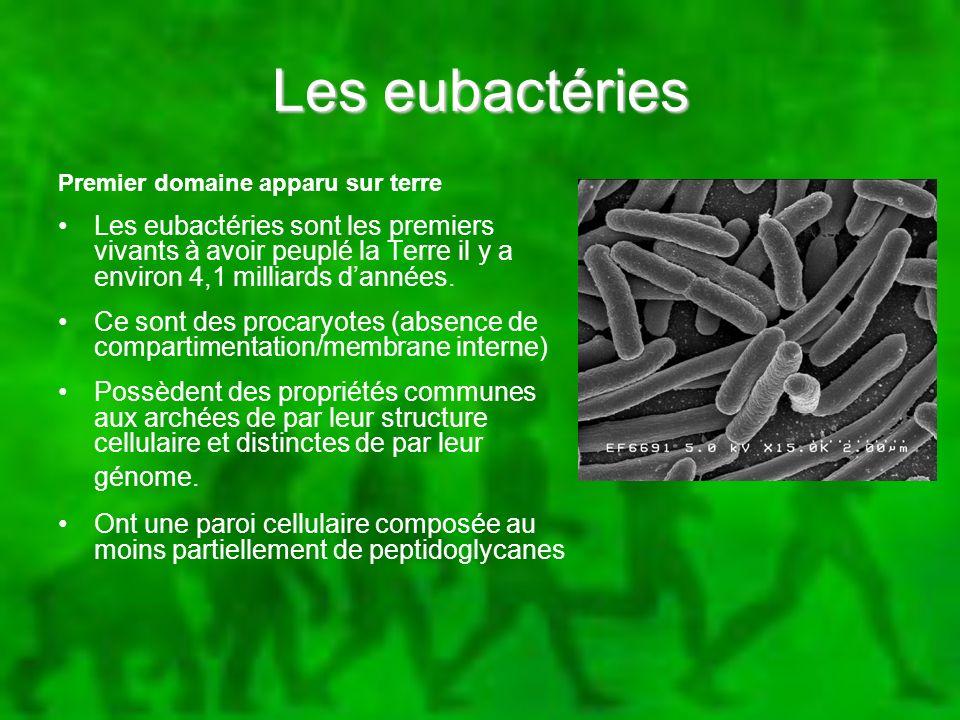Les eubactéries Premier domaine apparu sur terre Les eubactéries sont les premiers vivants à avoir peuplé la Terre il y a environ 4,1 milliards dannée