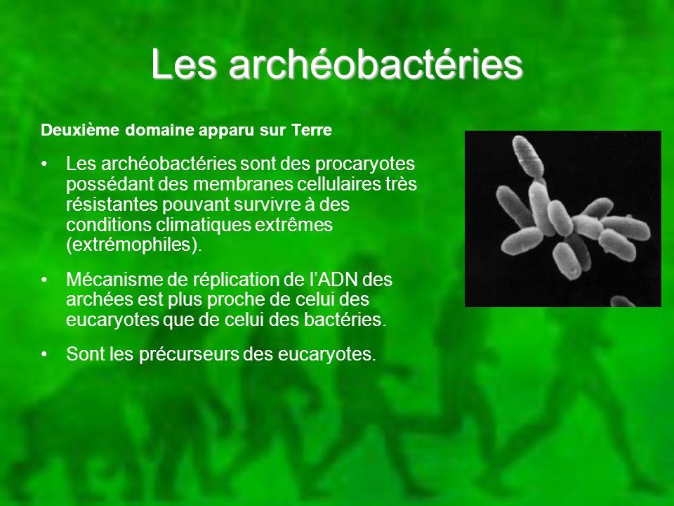 Les archéobactéries Deuxième domaine apparu sur Terre Les archéobactéries sont des procaryotes possédant des membranes cellulaires très résistantes po