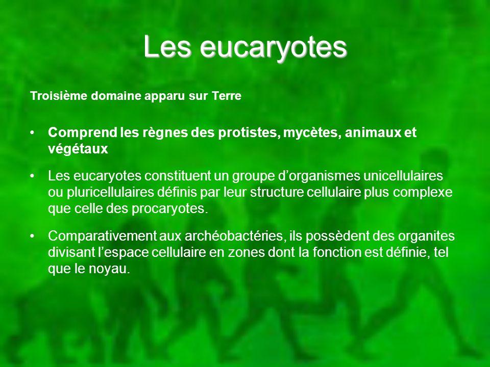 Les eucaryotes Troisième domaine apparu sur Terre Comprend les règnes des protistes, mycètes, animaux et végétaux Les eucaryotes constituent un groupe