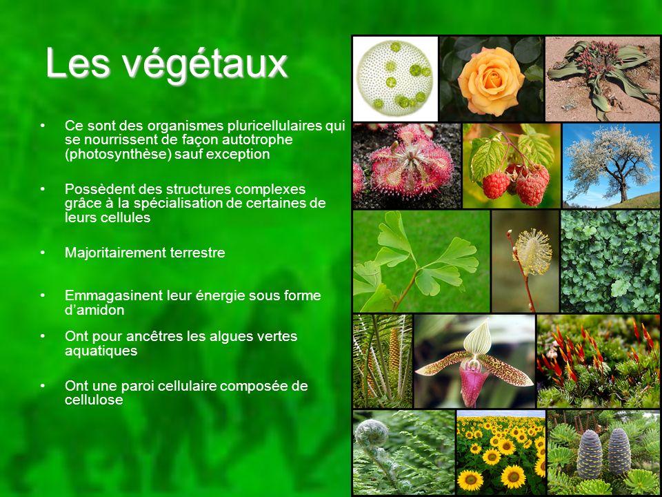 Les végétaux Ce sont des organismes pluricellulaires qui se nourrissent de façon autotrophe (photosynthèse) sauf exception Possèdent des structures co