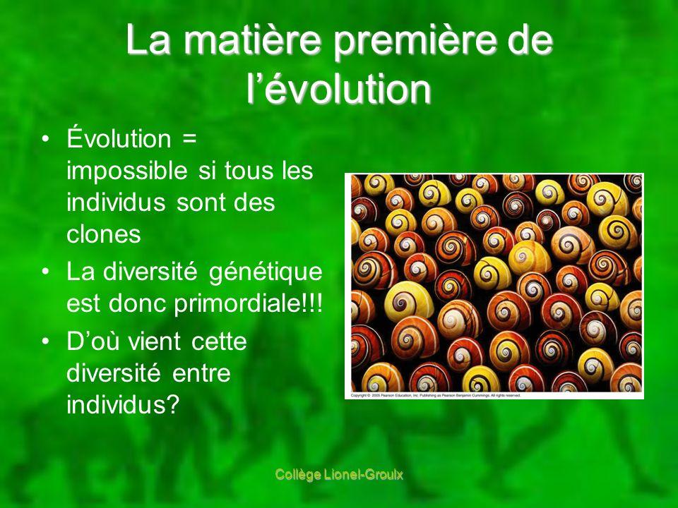 La matière première de lévolution Évolution = impossible si tous les individus sont des clones La diversité génétique est donc primordiale!!! Doù vien