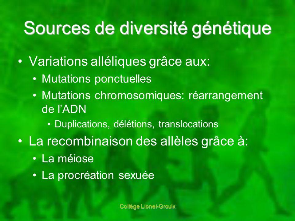 Sources de diversité génétique Variations alléliques grâce aux: Mutations ponctuelles Mutations chromosomiques: réarrangement de lADN Duplications, dé
