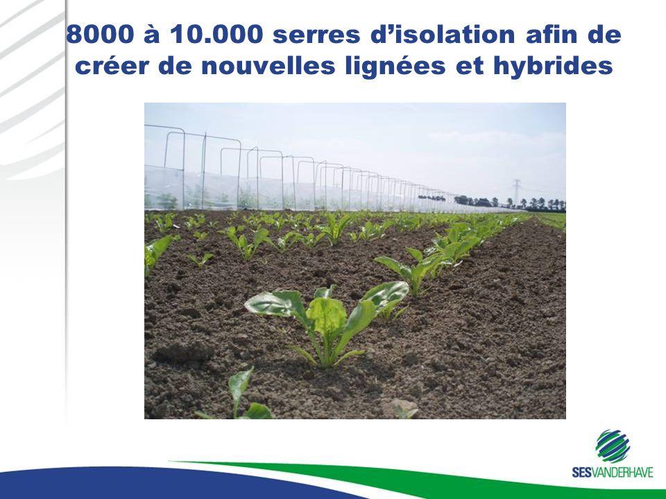 8000 à 10.000 serres disolation afin de créer de nouvelles lignées et hybrides