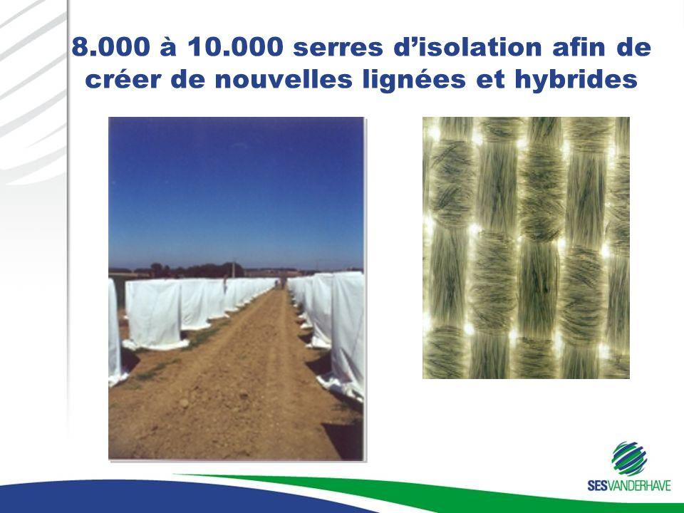 8.000 à 10.000 serres disolation afin de créer de nouvelles lignées et hybrides