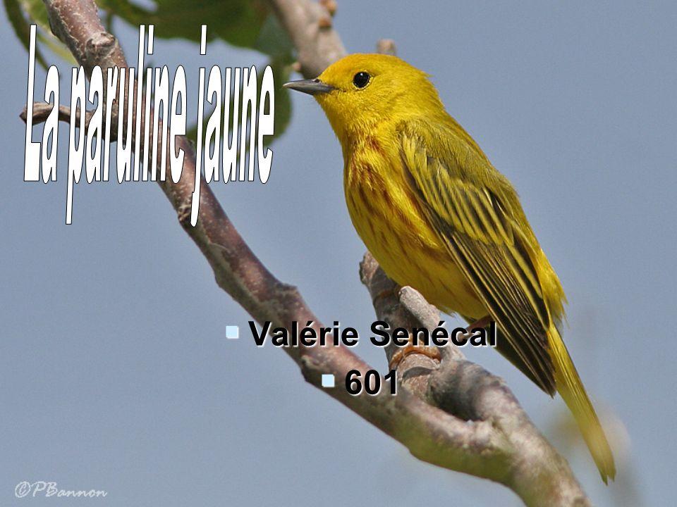 Valérie Senécal 601