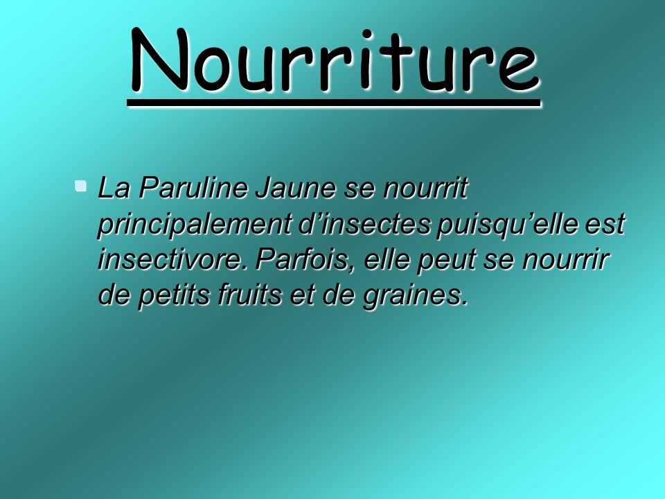 Nourriture La Paruline Jaune se nourrit principalement dinsectes puisquelle est insectivore.