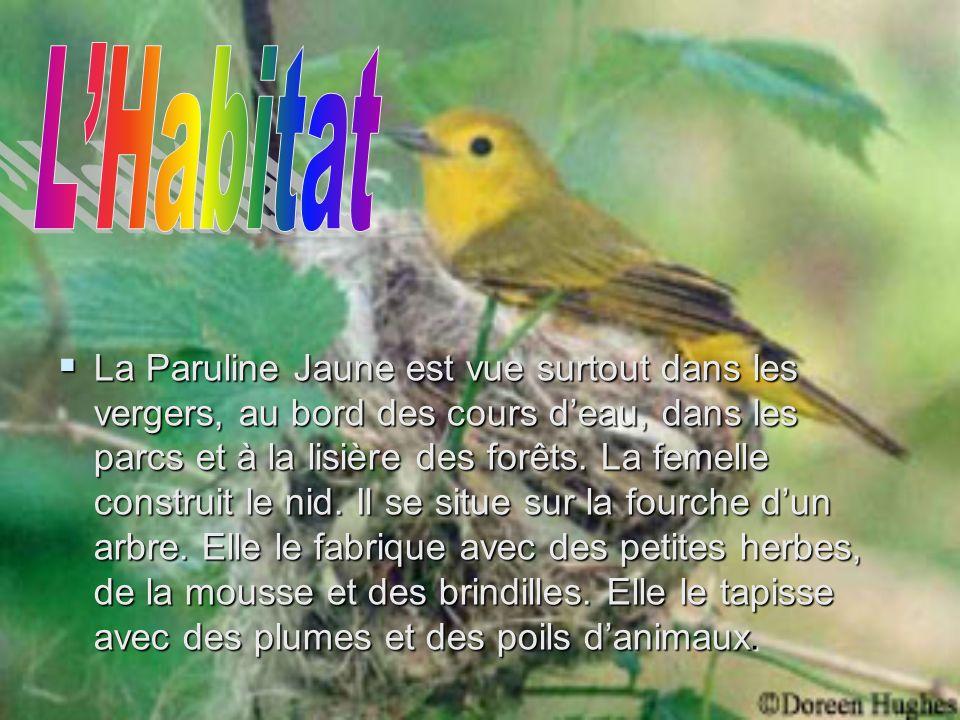 La Paruline Jaune est vue surtout dans les vergers, au bord des cours deau, dans les parcs et à la lisière des forêts.