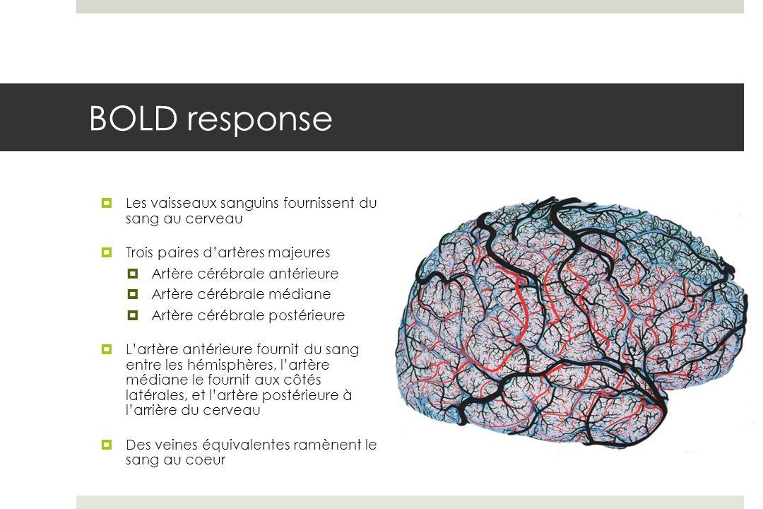 BOLD response Les vaisseaux sanguins fournissent du sang au cerveau Trois paires dartères majeures Artère cérébrale antérieure Artère cérébrale médiane Artère cérébrale postérieure Lartère antérieure fournit du sang entre les hémisphères, lartère médiane le fournit aux côtés latérales, et lartère postérieure à larrière du cerveau Des veines équivalentes ramènent le sang au coeur