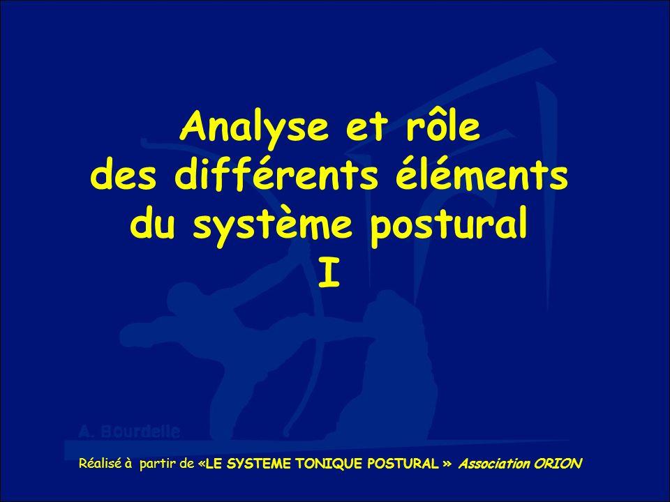 Analyse et rôle des différents éléments du système postural I Réalisé à partir de «LE SYSTEME TONIQUE POSTURAL » Association ORION