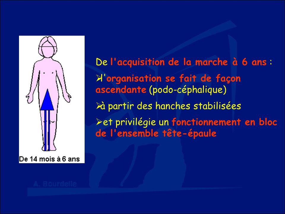 De l'acquisition de la marche à 6 ans : l'organisation se fait de façon ascendante (podo-céphalique) à partir des hanches stabilisées et privilégie un