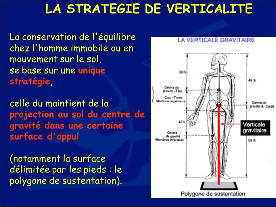 LA STRATEGIE DE VERTICALITE La conservation de l'équilibre chez l'homme immobile ou en mouvement sur le sol, se base sur une unique stratégie, celle d