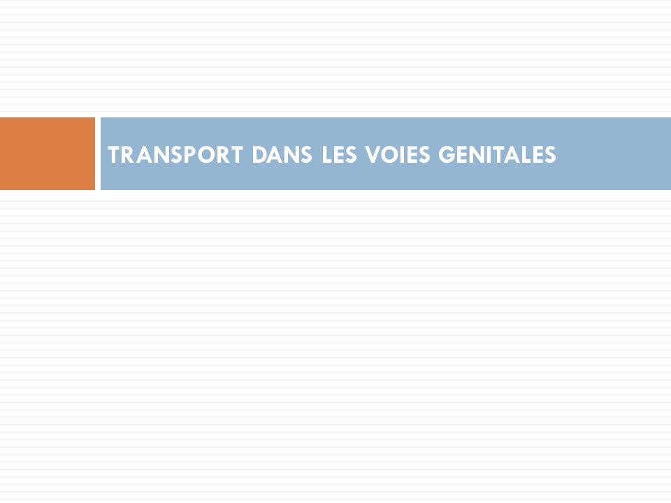 TRANSPORT DANS LES VOIES GENITALES