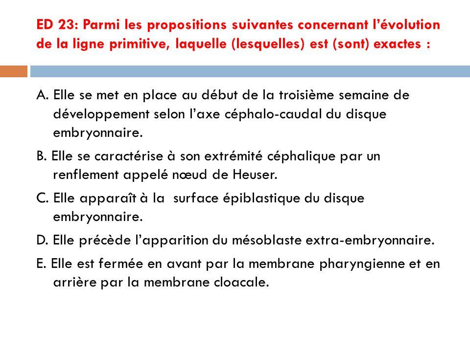 ED 23: Parmi les propositions suivantes concernant lévolution de la ligne primitive, laquelle (lesquelles) est (sont) exactes : A.