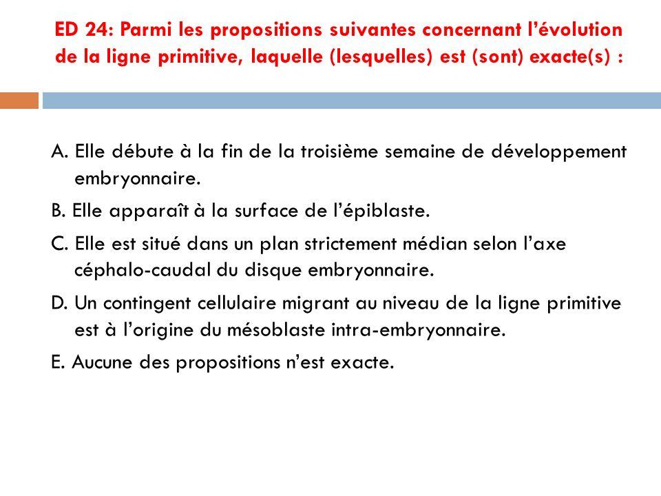 ED 24: Parmi les propositions suivantes concernant lévolution de la ligne primitive, laquelle (lesquelles) est (sont) exacte(s) : A.