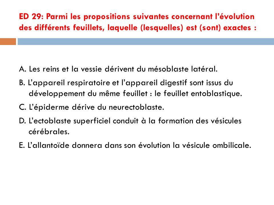 ED 29: Parmi les propositions suivantes concernant lévolution des différents feuillets, laquelle (lesquelles) est (sont) exactes : A.