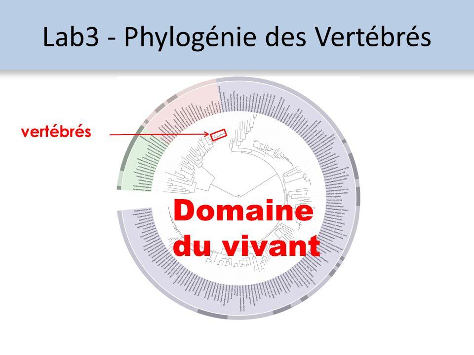 Lab3 - Phylogénie des Vertébrés vertébrés Domaine du vivant