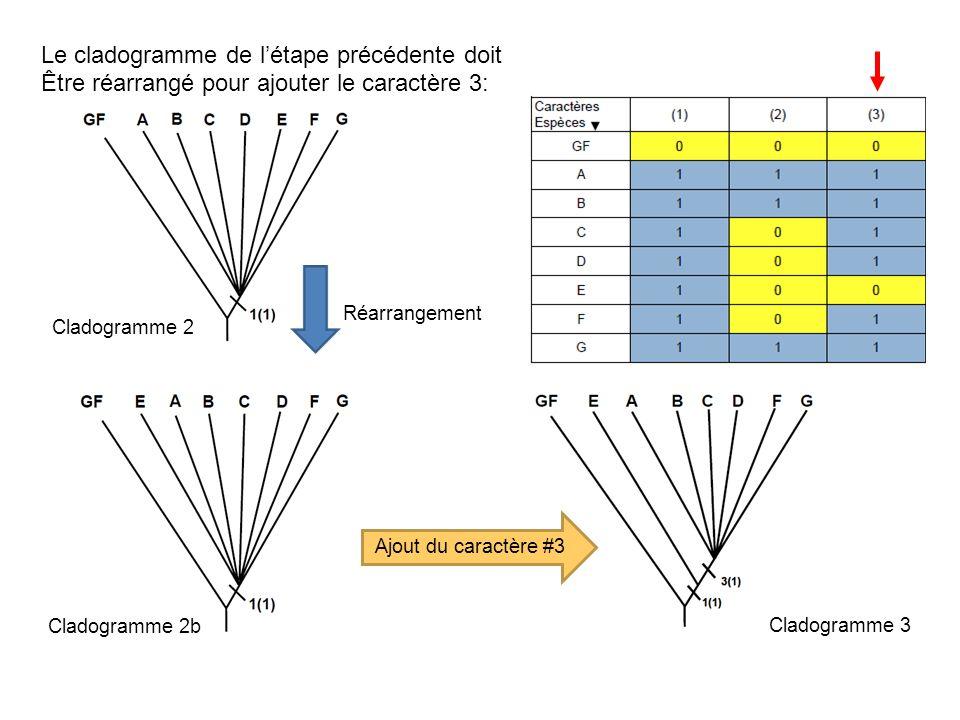 Le cladogramme de létape précédente doit Être réarrangé pour ajouter le caractère 3: Réarrangement Ajout du caractère #3 Cladogramme 2 Cladogramme 2b